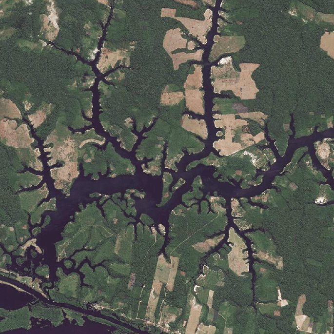 An image of the Amazon River